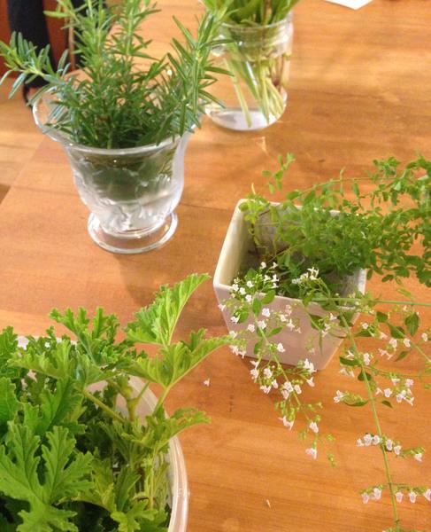 植物の恵みでココロとカラダを整える'フィトセラピー'入門講座&体験会